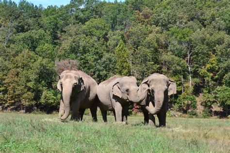 """Tag Archive for """"Elephant Sanctuary"""" - Their Turn"""