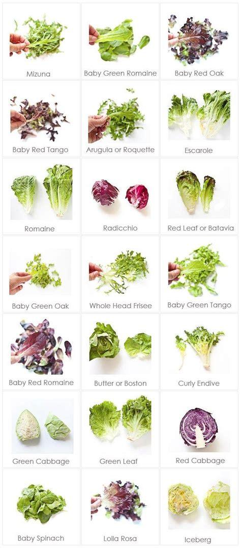 cara membuat salad buah dan gambarnya lettuce selada hidroponiq