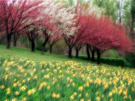 beautiful spring pictures december 2012 scenery backgrounds