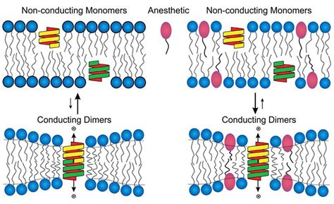 study offers  clue   anesthesia works newsroom