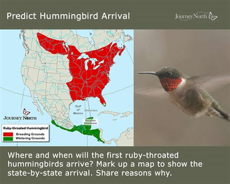 hummingbird migration citizen scientists track hummingbird migration with journey north