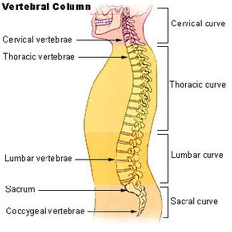 different sections of the spine pain between shoulder blades causes treatment