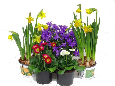 Winterharte Pflanzen Für Terrasse 843 by Pflanzen Set F 252 R 40 Cm Balkonk 228 Sten Fr 252 Hling Pflanzen