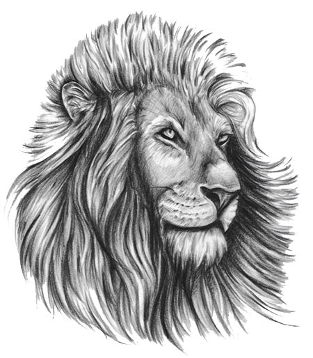 lion tattoo transparent png stickpng png transparent images png all