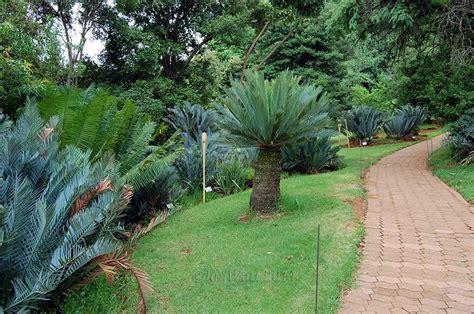 Pretoria Botanical Garden Botanical Garden Photography Botanical Gardens Pretoria