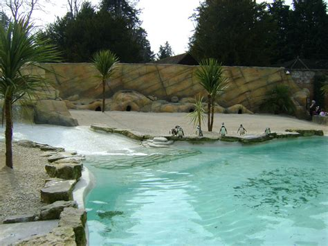 the quot go to quot pool guide with penguin pool quot atacama quot 187 cotswold wildlife park and