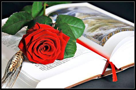 imagenes de rosas sobre libros sant jordi un patronazgo de rosas y letras