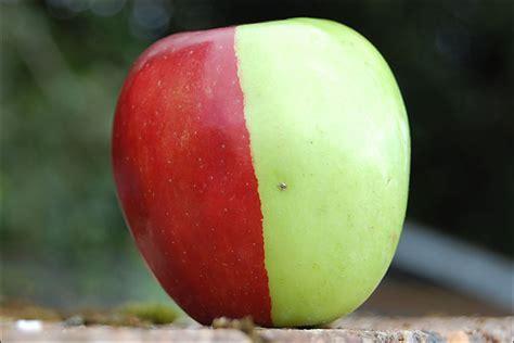 apple to apple bbc devon two tone apple