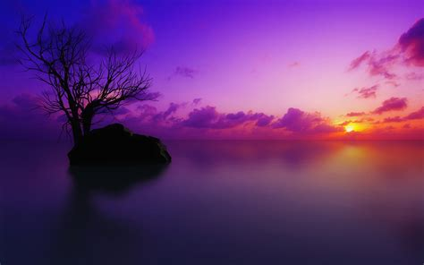 free wallpaper z 39 high definition purple wallpaper images for free download