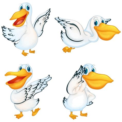pelican vectors   psd files
