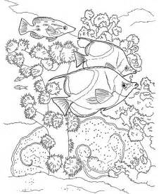 coral reef coloring page coral reef coloring book sle dover color it