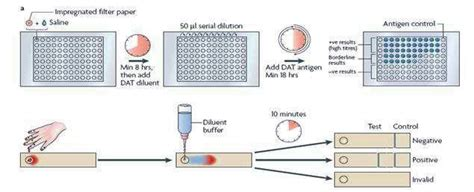 test leishmania 3 serological tests for visceral leishmaniasis a the