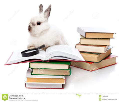 bunny s staycation s business trip books a rabbit is reading a book with a loupe royalty free