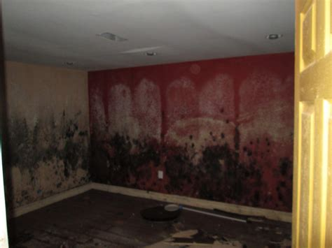 black mold restoration philadelphia pa elite water