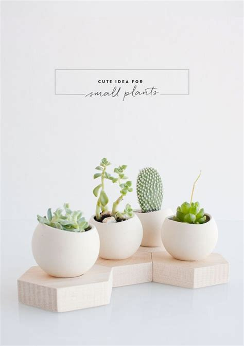 cute plants transform any corner into a green heaven with creative