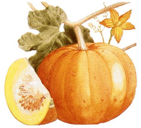 Biji Labu Pumpkin Seed 100 Gr cozy kitchen mengenal aneka jenis labu