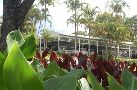 Mt Coot Tha Botanical Gardens Cafe The Botanical Caf 233 Mt Coot Tha Brisbane