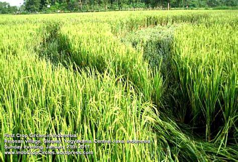 cropping pattern adalah 1st crop circles in indonesia sleman yogyakarta ranjes