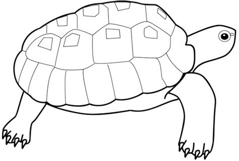 turtle coloring pages for toddlers turtle coloring pages for bestappsforkids