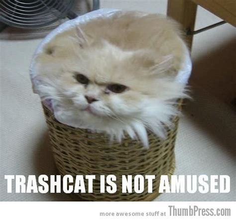kitten pictures with captions caption cats 25 hilarious cat photos spiced up with even