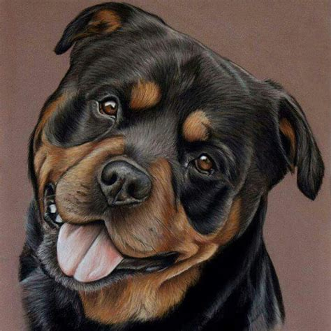 how to draw a rottweiler rottweiler petstagram drawing pastel pastelmat artist dessin