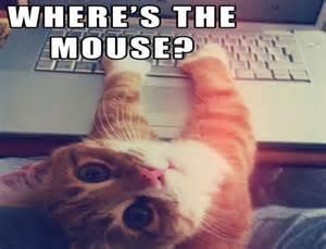 Cat Laptop Meme - cat meme quote funny humor grumpy computer wallpaper