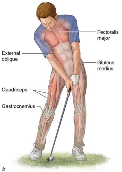 what muscles do you use to swing a bat sport therapy for the shoulder what is happening in the