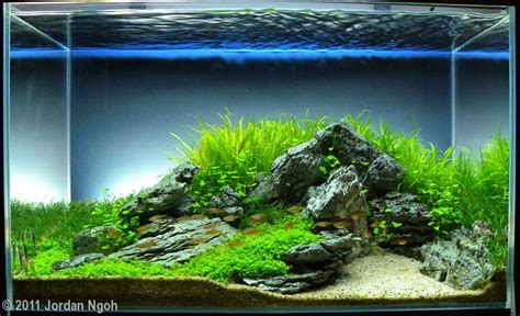 aquascaping tank 2011 aga aquascaping contest 259
