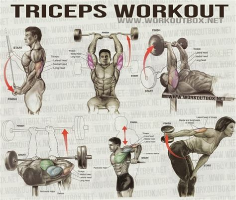 triceps workout healthy fitness workout sixpack back