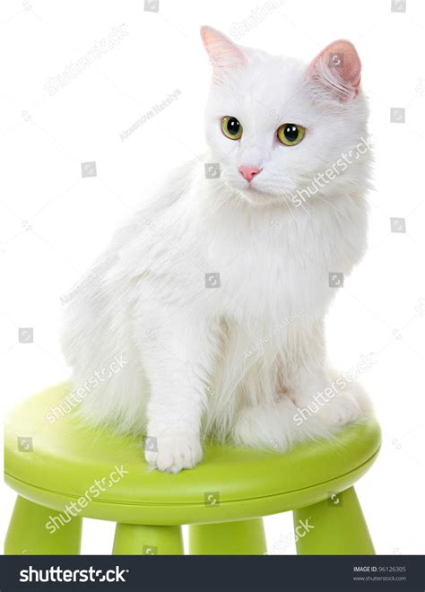 Cat Green Stool by White Cat Sitting On Green Stool Stock Photo 96126305