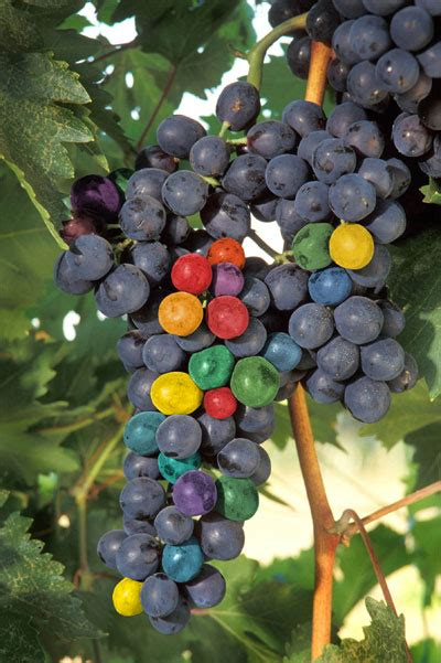 colored grapes photoshop tutorial beautifully pictured