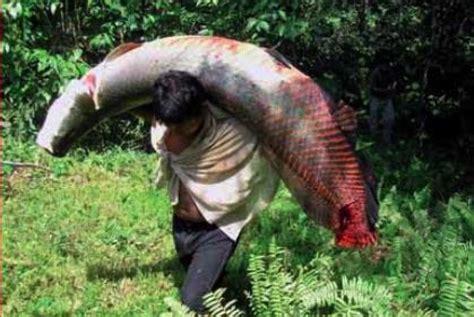 film barat monster ikan warga bogor digegerkan penemuan ikan monster di sungai