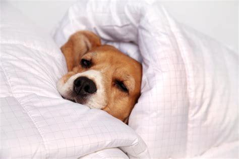 pourquoi mon dort sous les couvertures couettes