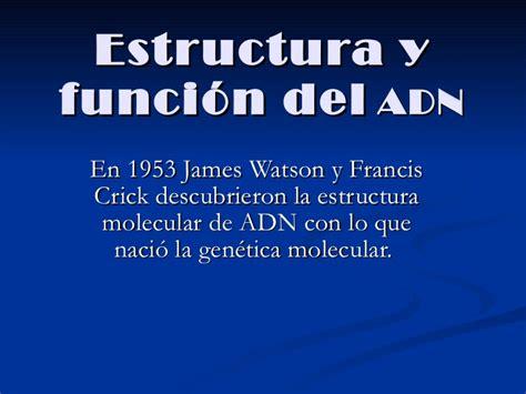 estructura y funcin del 8491130810 estructura y funci 243 n del adn