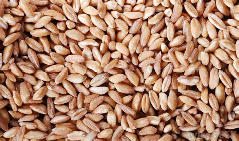 whole grains types what are the different types of whole grain foods
