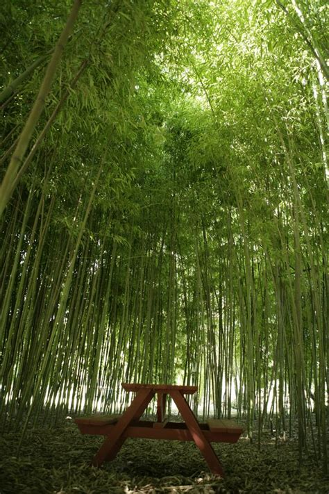 Bamboo Garden Atlanta by 43 Best Images About Pop The Question On