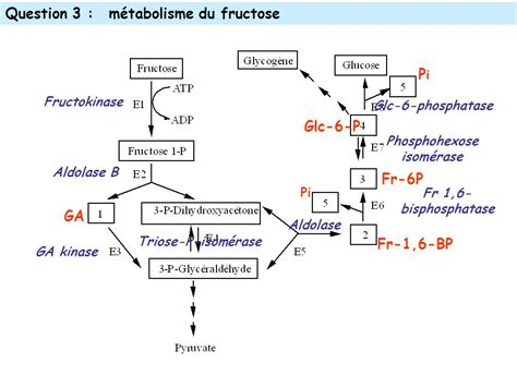 fructose s сыромоноедение fructose and pancreatic cancer