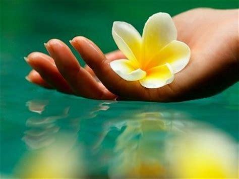 fiori di bach torino floriterapia e ruolo delle emozioni positive cure