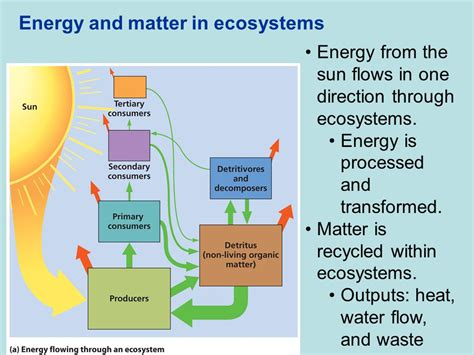 pattern of energy and matter flow chapter 3 environmental systems chemistry energy and