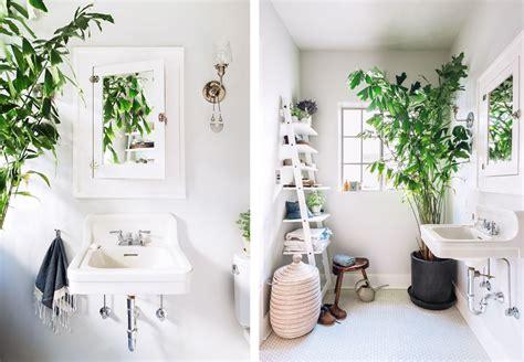 Incroyable Plante Salle De Bain Sans Lumiere #5: grande-plante-dans-salle-de-bain.png