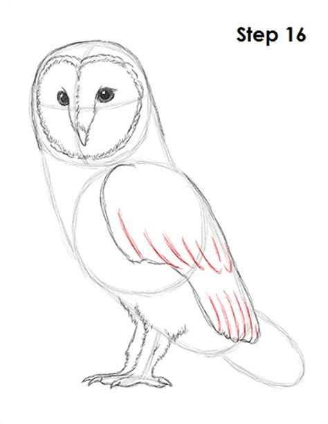 how to draw an owl learn to draw a cute colorful owl in how to draw a barn owl
