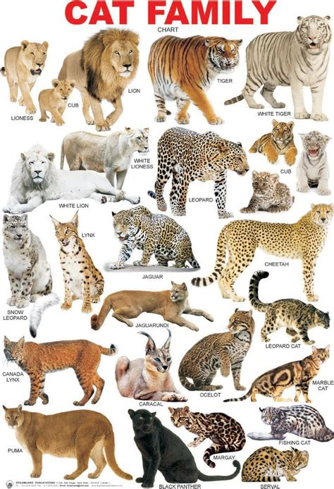 cat breed chart google search cat breeds chart animals animals wild