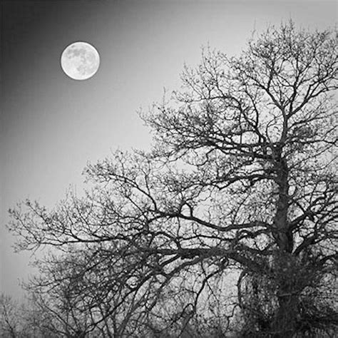 Calendrier Decembre 2008 D 233 Cembre 2008 Jardinage Avec La Lune