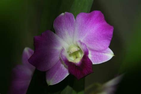 Tanaman Bunga Anggrek Tanah All Tipe 1 tanaman hias