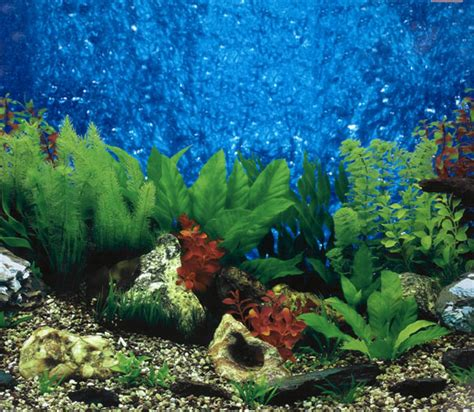 Fish Tank Backgrounds Printable 10 Gallon Aquarium Backgrounds Printable 2017 Fish Tank Backgrounds For Fish Tanks Printable Free