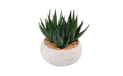 sainsburys succulent artificial plants decor