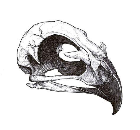 bird skull tattoo best 25 skull design ideas on arm