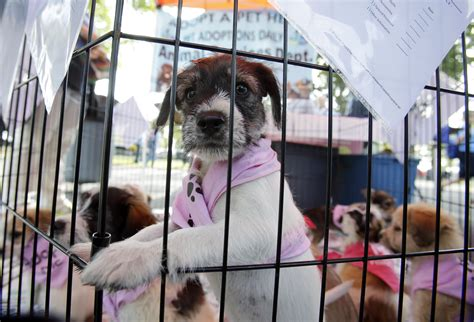 pet stores in ohio that sell puppies in more cities that doggie in the window is not for sale ideastream northeast