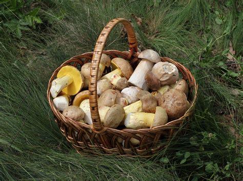 råskog bildet skog anlegg mat innh 248 sting produsere fersk