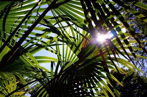 tanaman hijau tahan panas  taman tetap asri  musim